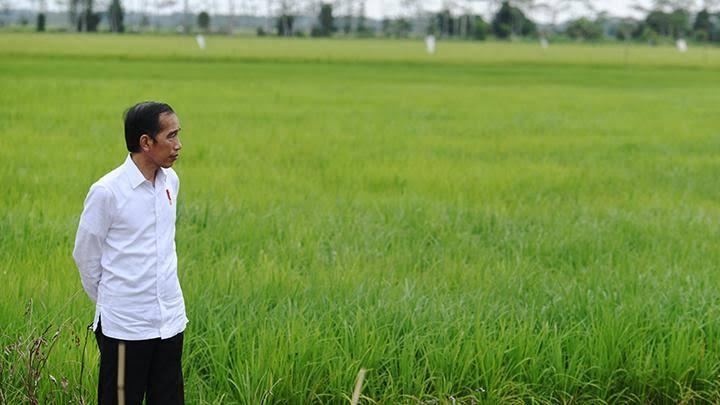 Jokowi tinjau pangan di indonesia