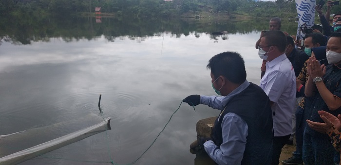 Berkunjung dan Apresiasi Warga Pagaralam, Gub Sumsel Tabur Benih Ikan di Desa Tebat Gheban